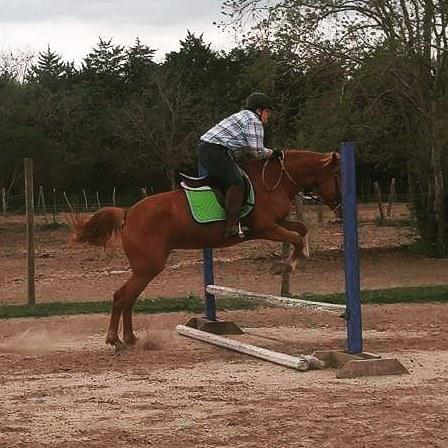 Go_pony_go___jellybean__jumpingpony__dayfour